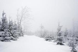 chemin d'hiver dans le brouillard photo