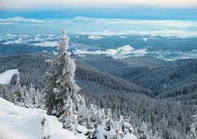 sapin dans les montagnes d'hiver photo