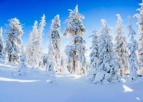 arbre couvert de neige hiver magique