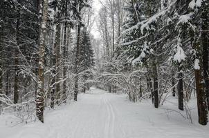 route dans la forêt d'hiver