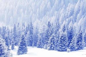 forêt d'hiver dans les montagnes photo