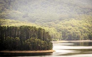 forêt du lac photo