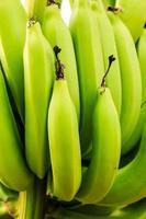 bananes crues photo