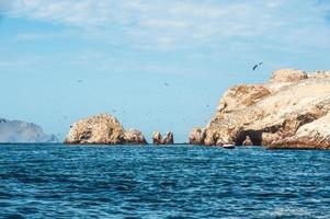 îles ballestas, réserve nationale de paracas au pérou photo