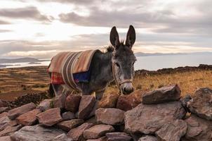 puno, lac titicaca photo