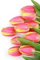 tulipe pâques photo