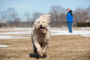 chiens dans le parc 8 photo