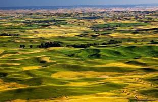 Les champs de blé jaune vert fermes de steptoe butte palouse washington photo