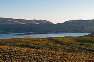 vue sur le lac chelan depuis le vignoble de benson photo
