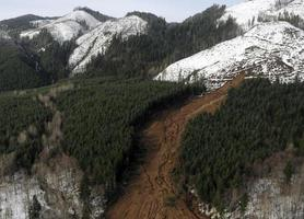 coulées de boue de la forêt de Washington photo