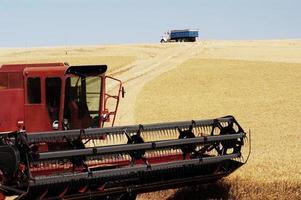 récolte de blé 22