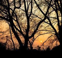 parc au crépuscule