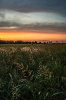 coucher soleil, sur, foin, balles, et, champ, dans, sunnyvale, texas photo