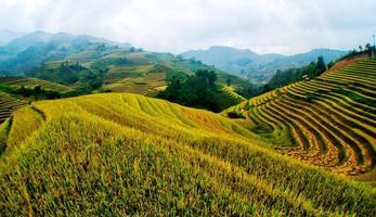 rizières en terrasses de mu cang chai, yenbai, vietnam. photo