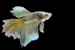 combattre le poisson photo