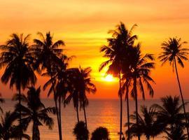 beau coucher de soleil