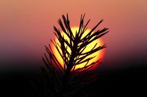 coucher de soleil rose photo