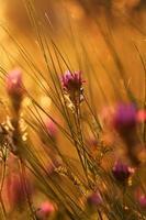 prairie au coucher du soleil photo