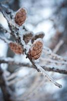 pluie glacée dans les parcs de Moscou, catastrophe naturelle photo
