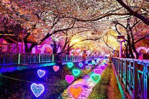 Belles fleurs de sakura à busan, corée du sud photo
