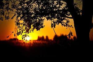 coucher de soleil arbre solitaire photo
