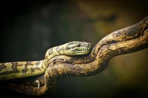 serpent de brousse