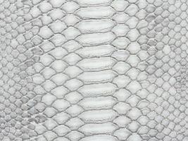 peau de serpent photo