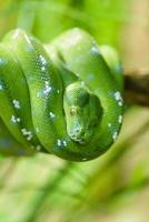 serpent vert photo