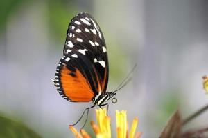 papillon sur une fleur photo