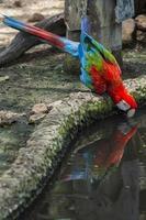 perroquets photo