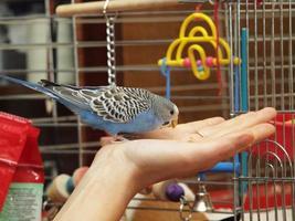 perroquet photo