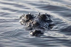 visage de crocodile photo