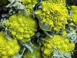 chou brocoli vert calabrais photo