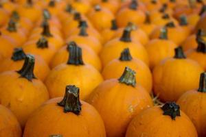 photographie de petites citrouilles orange photo