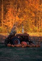 champ de citrouilles et tracteur