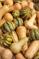 courge butternut photo