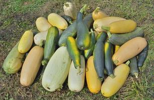 courges de légumes photo