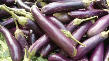 aubergines violettes photo