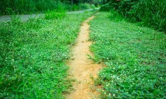 route en herbe, vélo de route photo
