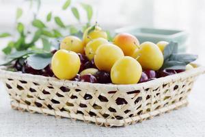 prune cerise