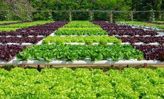 ferme de culture hydroponique de légumes bio photo