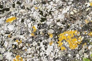 rocher avec des lichens photo