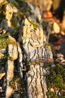 mousse et rochers photo