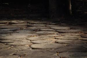 bordé d'arbres