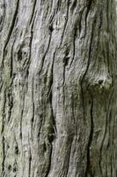 surface de l'arbre