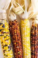 maïs en silex
