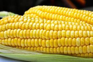 maïs sucré de couleur vive.