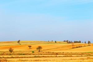 champ d'agriculteur