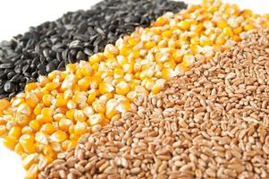 mélanger le maïs, le blé, les graines de tournesol. photo
