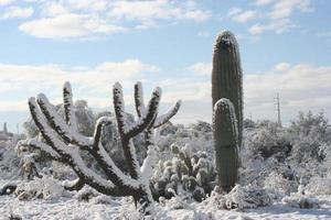 neige du désert photo